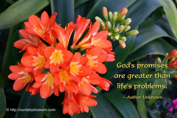 God's promises are greater than life's problems. ~ Author Unknown