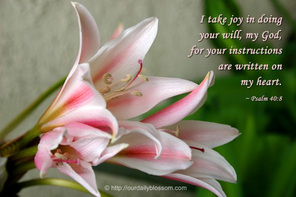I take joy in doing your will, my God, for your instructions are written on my heart. ~ Psalm 40:8