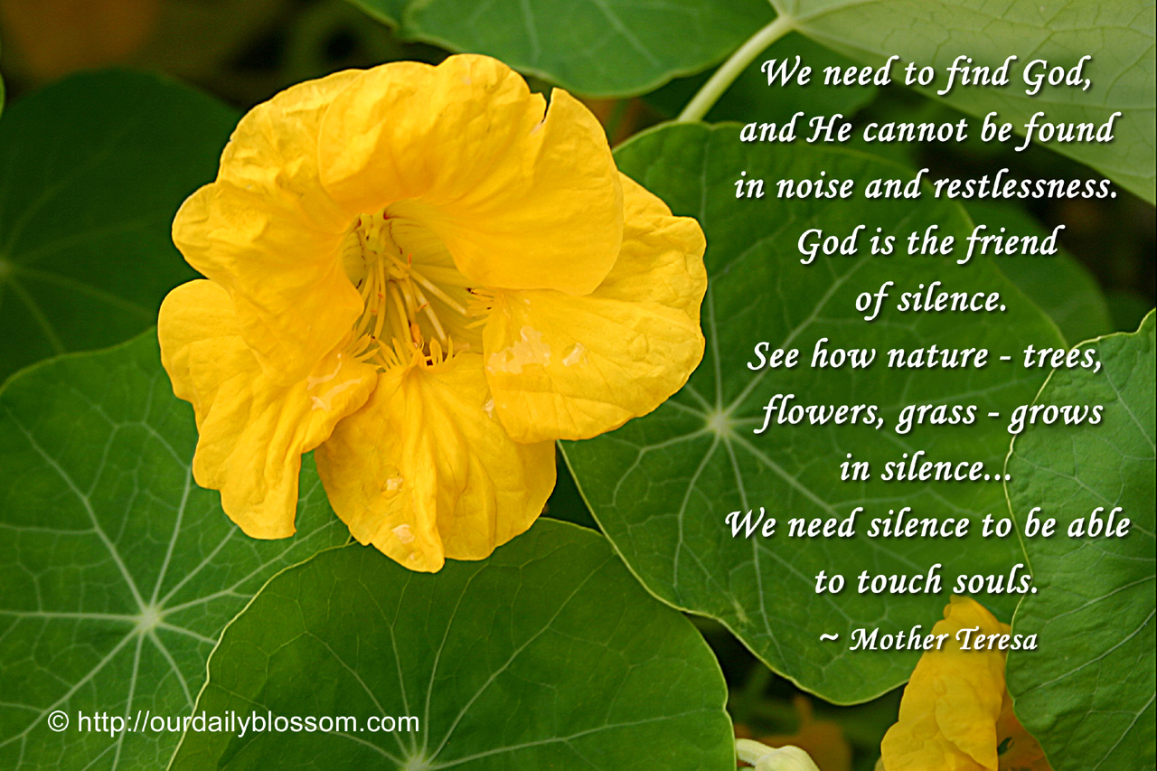 Spiritual Quote Mother Teresa Our Daily Blossom