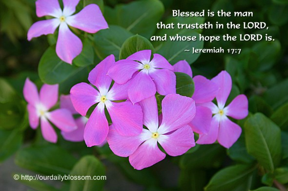 Blessed is the man that trusteth in the LORD, and whose hope the LORD is. ~ Jeremiah 17:7