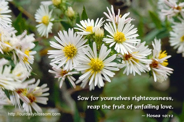 Sow for yourselves righteousness, reap the fruit of unfailing love. ~ Hosea 10:12