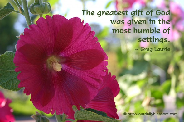 The greatest gift of God was given in the most humble of settings. ~ Greg Laurie