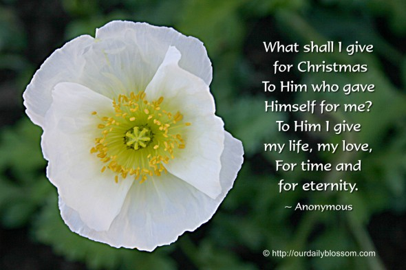 What shall I give for Christmas, to Him who gave Himself for me? To Him I give my life, my love, for time and for eternity. ~ Anonymous