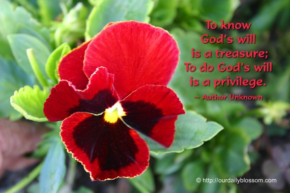 To know God's will is a treasure; to do God's will is a privilege. ~ Author Unknown