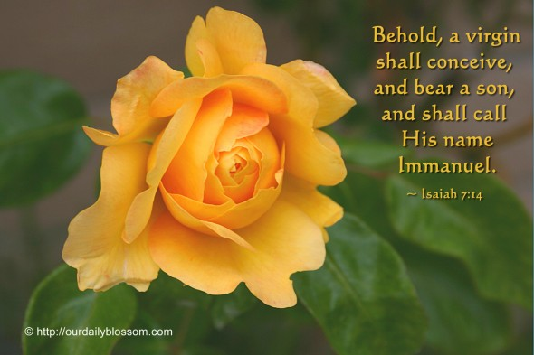Behold, a virgin shall conceive, and bear a son, and shall call his name Immanuel. ~ Isaiah 7:14