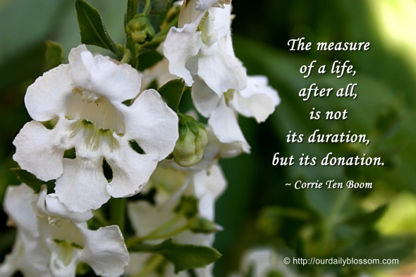 The measure of a life, after all, is not its duration, but its donation. ~ Corrie Ten Boom