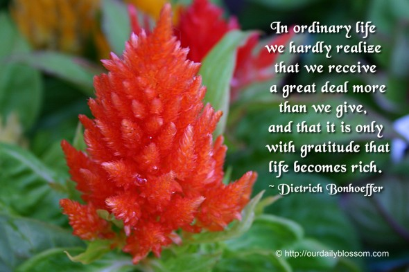 In ordinary life we hardly realize that we receive a great deal more than we give, and that it is only with gratitude that life becomes rich. ~ Dietrich Bonhoeffer