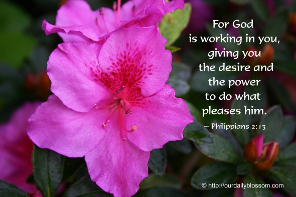 For God is working in you, giving you the desire and the power to do what pleases him. ~ Philippians 2:13
