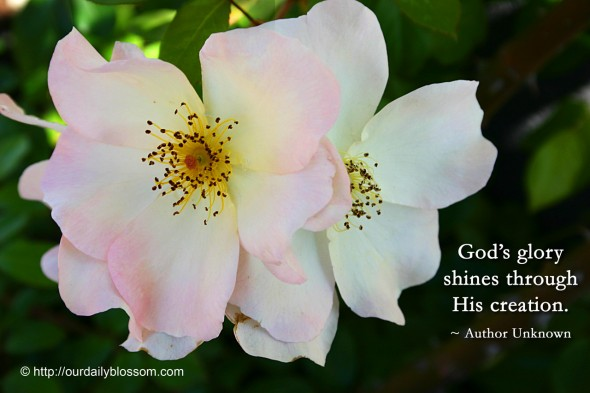 God's glory shines through His creation. ~ Author Unknown