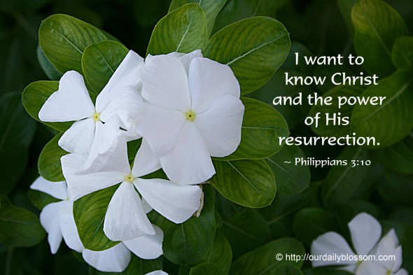 I want to know Christ and the power of his resurrection. ~ Philippians 3:10
