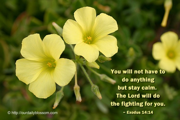 You will not have to do anything but stay calm. The Lord will do the fighting for you. ~ Exodus 14:14