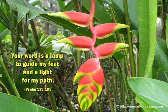 Your word is a lamp to guide my feet and a light for my path. ~ Psalm 119:105