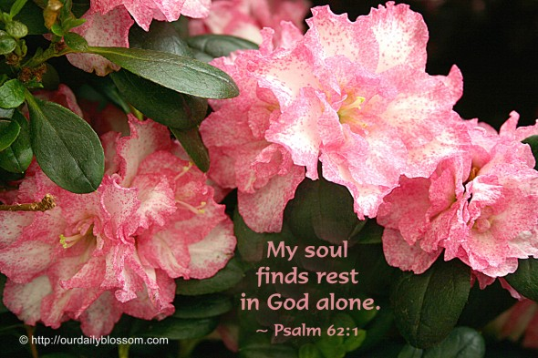 My soul finds rest in God alone. ~ Psalm 62:1