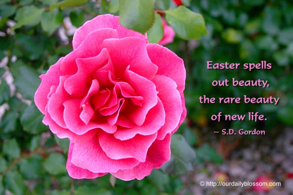 Easter spells out beauty, the rare beauty of new life. ~ S.D. Gordon