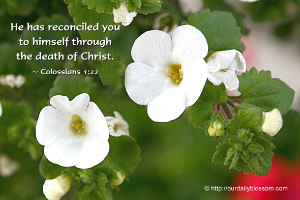 He has reconciled you to himself through the death of Christ. ~ Colossians 1:22