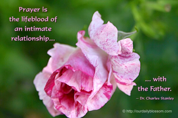 Prayer is the lifeblood of an intimate relationship with the Father. ~ Dr. Charles Stanley