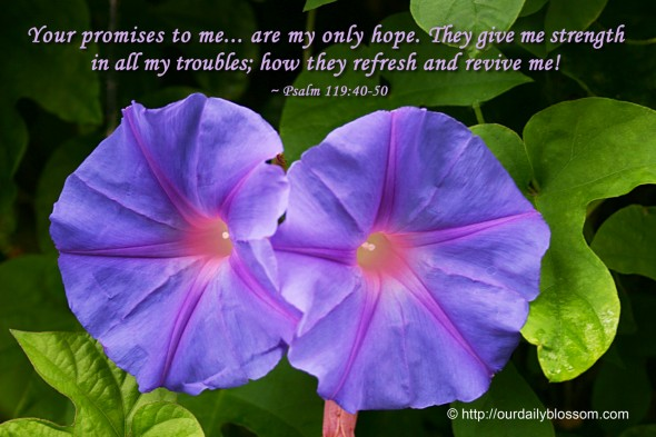 Your promises to me... are my only hope. They give me strength  in all my troubles; how they refresh and revive me! ~ Psalm 119:40-50
