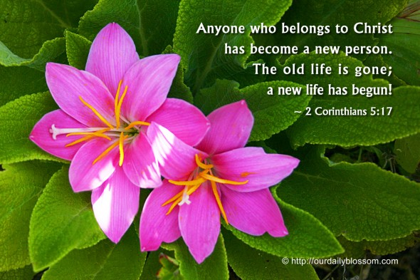 Anyone who belongs to Christ has become a new person. The old life is gone; a new life has begun. ~ 2 Corinthians 5:17