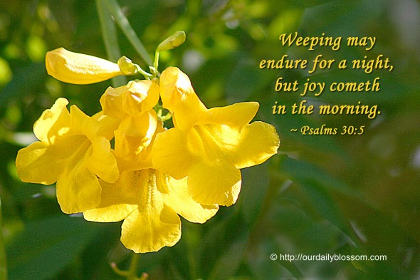 Weeping may endure for a night, but joy cometh in the morning. ~ Psalm 30:5