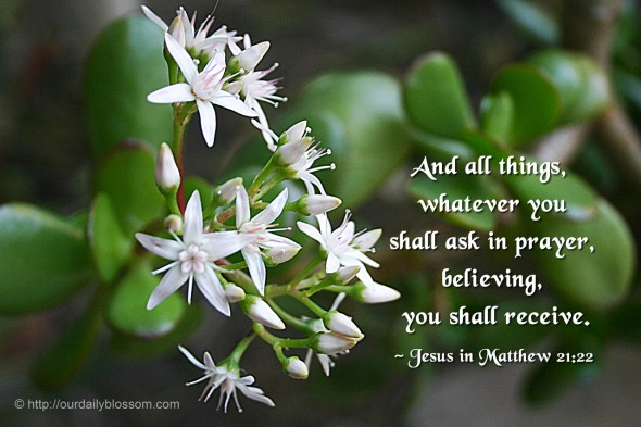 And all things whatever you shall ask in prayer, believing, you shall receive. ~ Jesus in Matthew 21:22