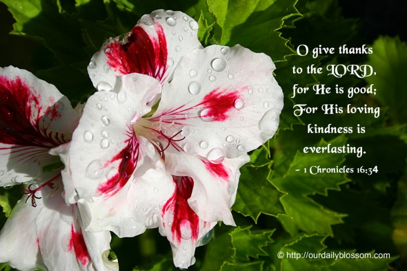 O give thanks to the LORD, for He is good; For His loving kindness is everlasting. ~ 1 Chronicles 16:34