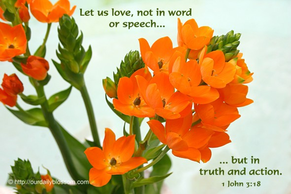 Let us love, not in word or speech, but in truth and action. ~ 1 John 3:18