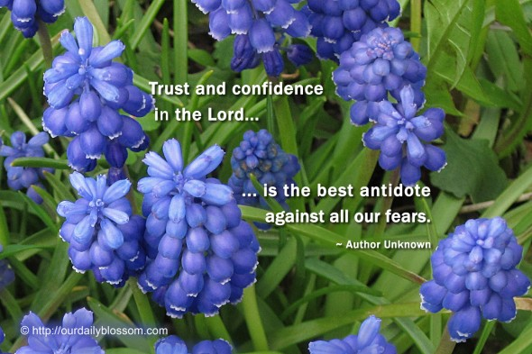 Trust and confidence in the Lord is the best antidote against fears. ~ Author Unknown