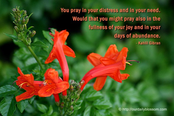 You pray in your distress and in your need. Would that you might pray also in the fullness of your joy and in your days of abundance. ~ Kahlil Gibran