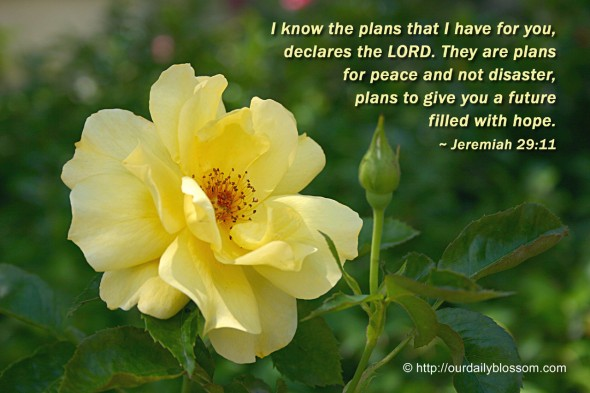 I know the plans that I have for you, declares the LORD. They are plans for peace and not disaster, plans to give you a future filled with hope. ~ Jeremiah 29:11