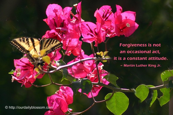 Forgiveness is not an occasional act, it is a constant attitude. ~ Martin Luther King Jr.