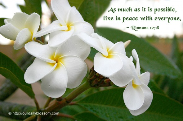 As much as it is possible, live in peace with everyone. ~ Romans 12:18