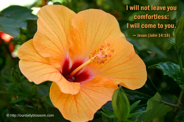 I will not leave you comfortless: I will come to you. ~ Jesus (John 14:18)