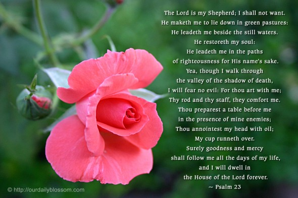 The LORD is my shepherd; I shall not want. He maketh me to lie down in green pastures: he leadeth me beside the still waters.  He restoreth my soul: he leadeth me in the paths of righteousness for his name's sake.  Yea, though I walk through the valley of the shadow of death, I will fear no evil: for thou art with me; thy rod and thy staff they comfort me.  Thou preparest a table before me in the presence of mine enemies: thou anointest my head with oil; my cup runneth over.  Surely goodness and mercy shall follow me all the days of my life: and I will dwell in the house of the LORD for ever. ~ Psalm 23