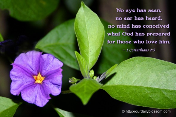 No eye has seen, no ear has heard, no mind has conceived what God has prepared for those who love him. ~ 1 Corinthians 2:9