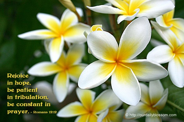 Rejoice in hope, be patient in tribulation, be constant in prayer. ~ Romans 12:12
