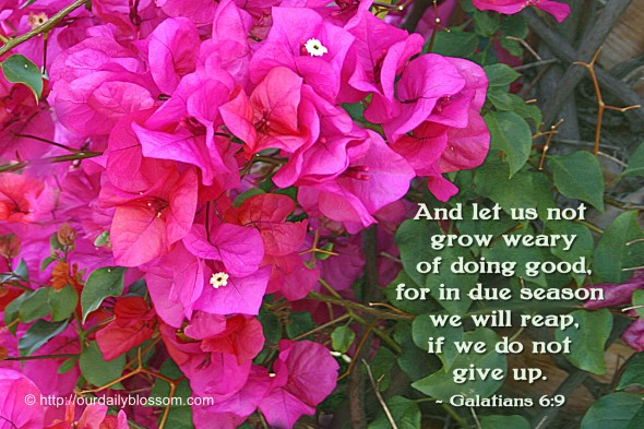 And let us not grow weary of doing good, for in due season we will reap, if we do not give up. ~ Galatians 6:9