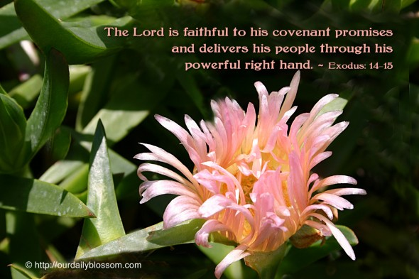 The Lord is faithful to his covenant promises and delivers his people through his powerful right hand. ~ Exodus 14:15