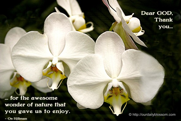 Dear GOD, Thank you for the awesome wonder of nature that you gave us to enjoy. ~ Os Hillman
