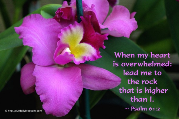 When my heart is overwhelmed: lead me to the rock that is higher than I. ~ Psalm 62:1